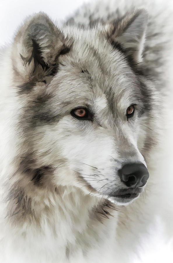 Wolf Photograph - Wolf Dog by Athena Mckinzie