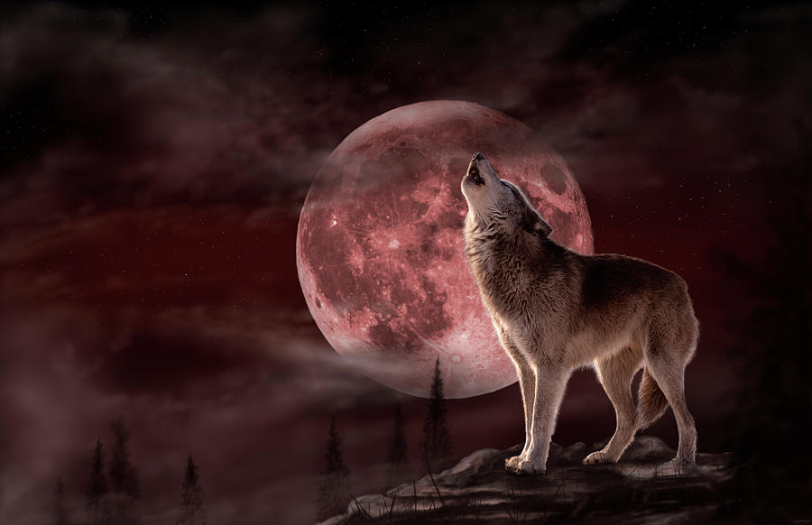 Wolf Moon Photograph - Wolf Moon by Gordon Semmens