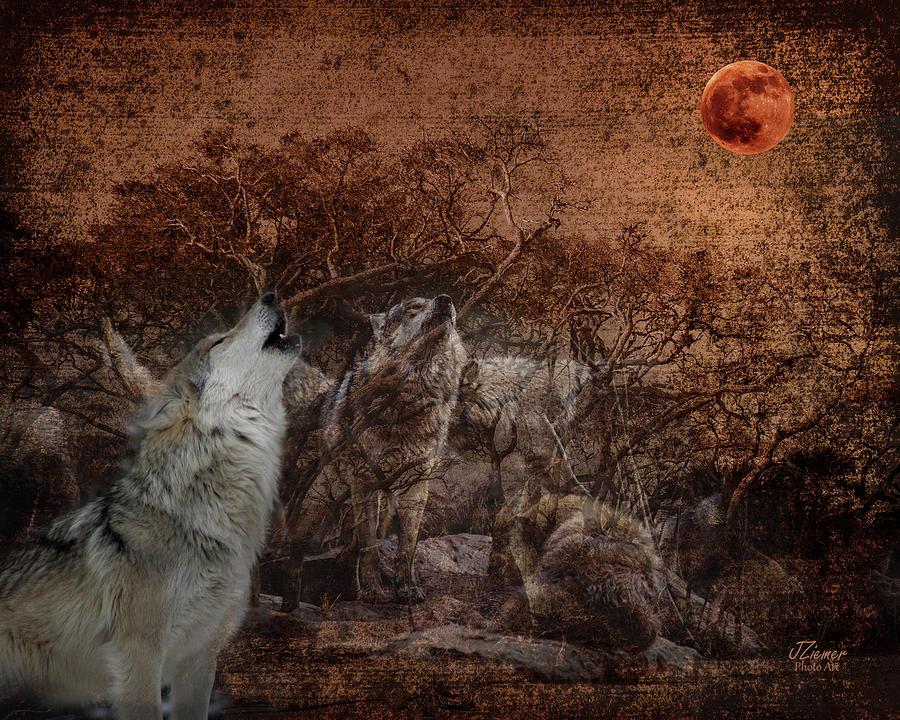 Moon Photograph - Wolf Moon by Jim Ziemer