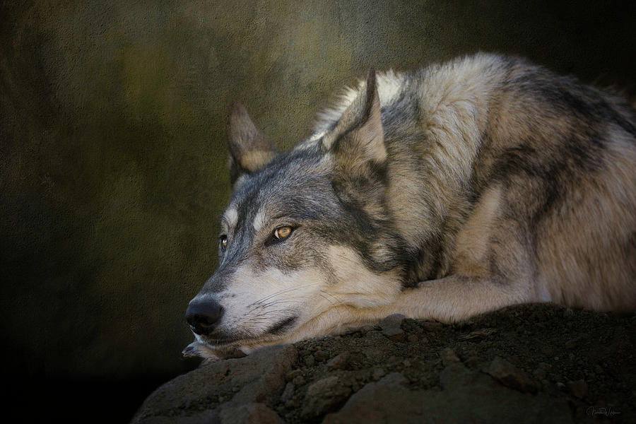 Wolf Watch by Nicole Wilde