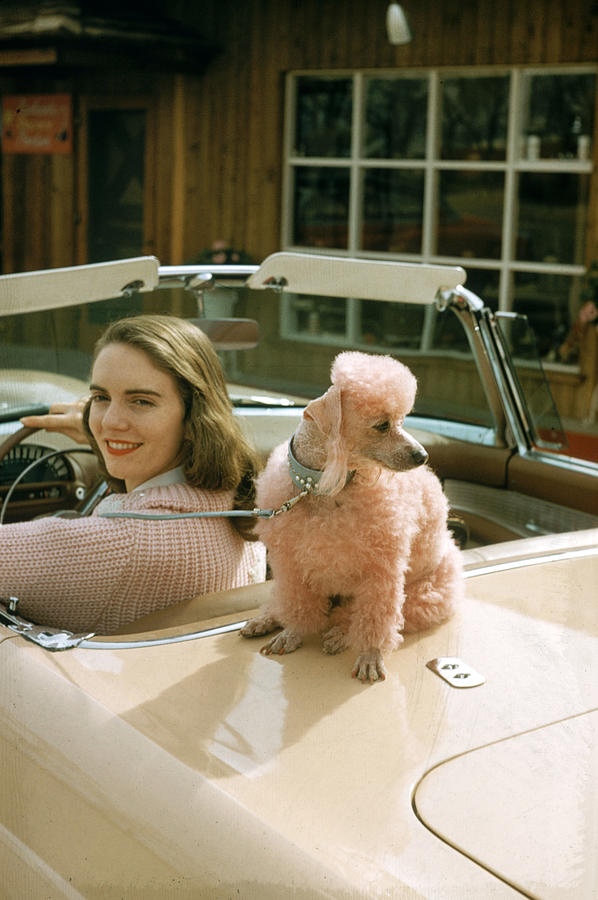 Woman & Her Poodle Photograph by Nina Leen