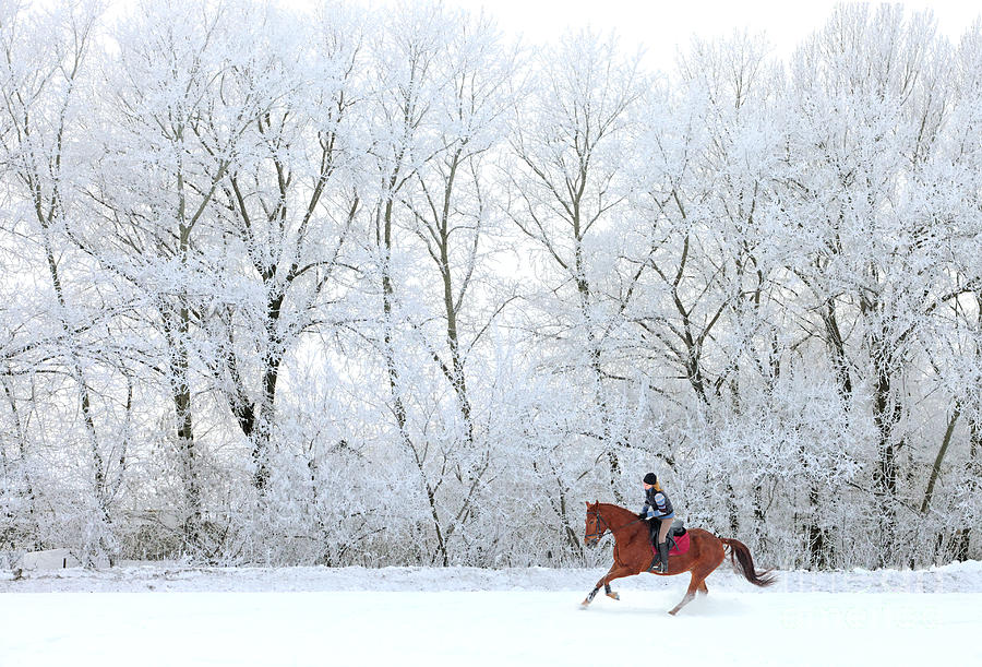 Purebred Horse Photograph - Woman And Her Horse Cantering In Fresh by Horsemen