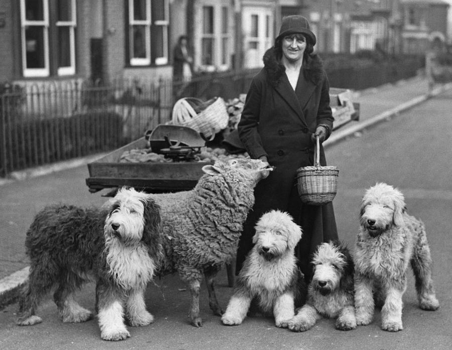 Woman And Pets Photograph by Fox Photos