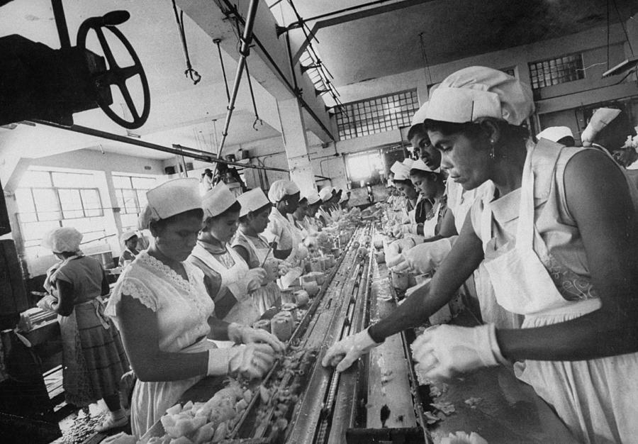 Cutting Photograph - Women Employees Trimming Pineapples For by Gordon Parks