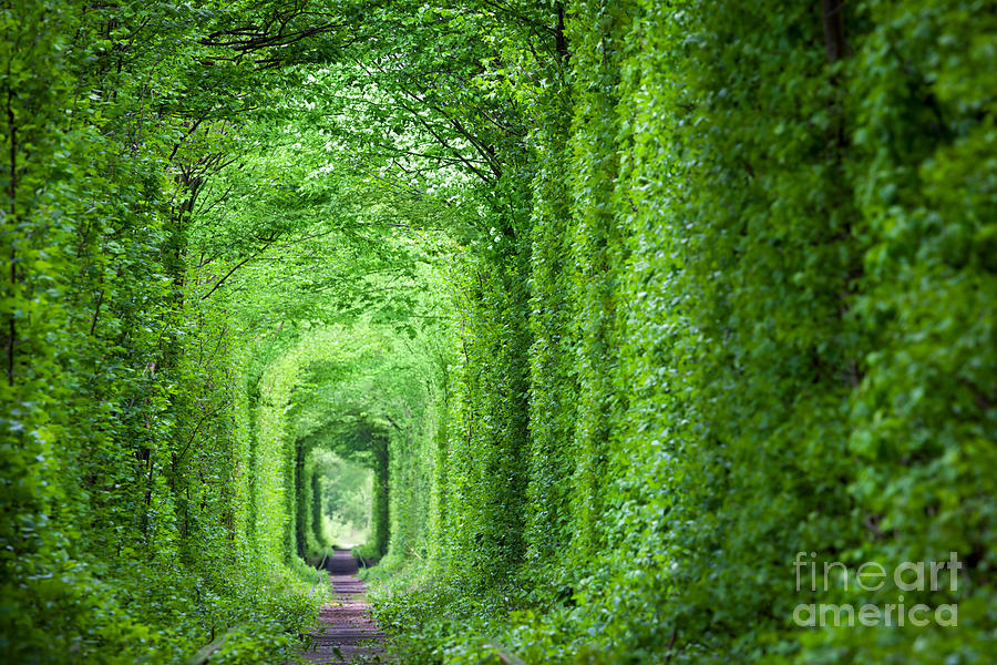 Love Photograph - Wonder Of Nature - Real Tunnel Of Love by Taiga