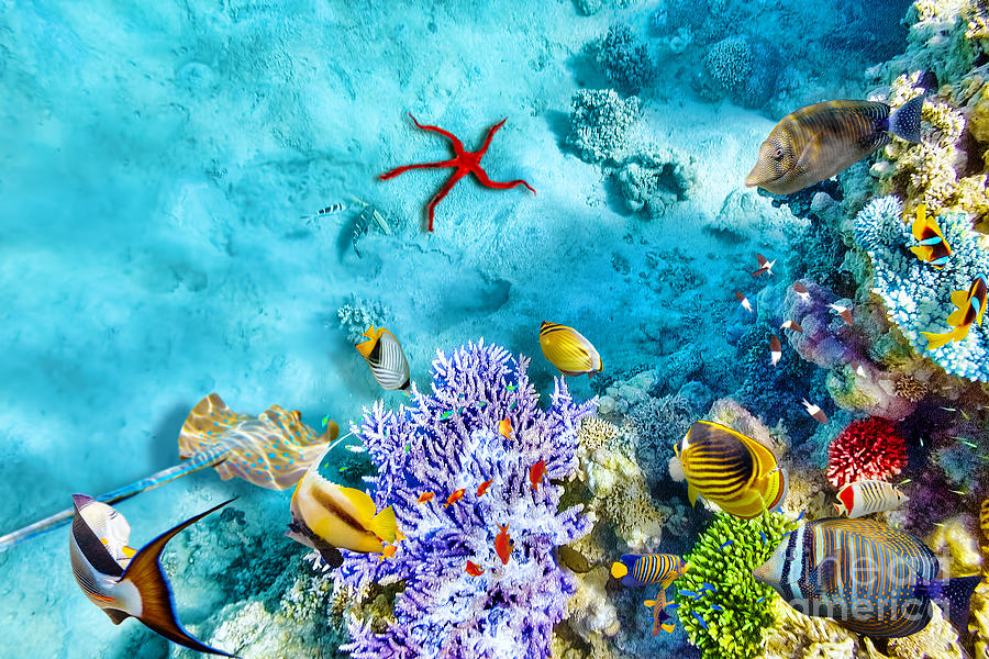 Red Photograph - Wonderful And Beautiful Underwater by V e