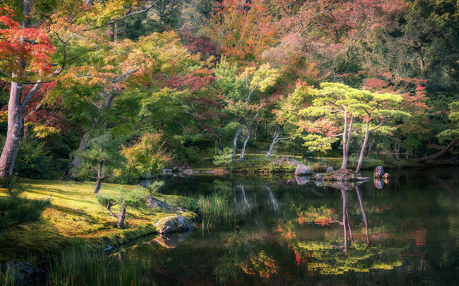 Wonderful colors at the Golden Pavilion in Kyoto. by Daniela Constantinescu