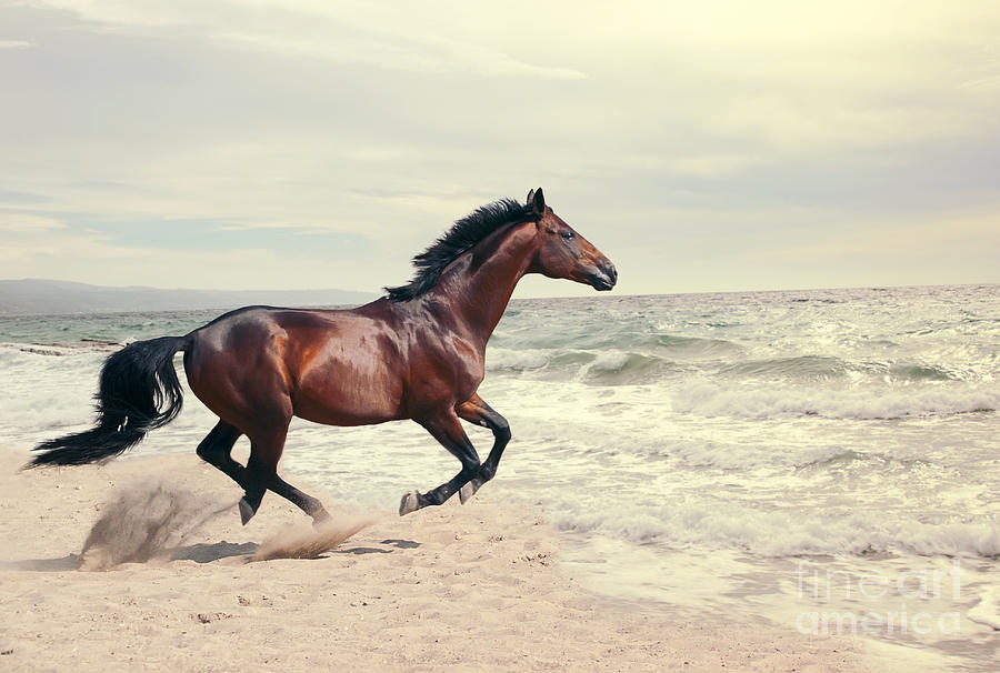 Equestrian Photograph - Wonderful Marine Landscape With by Anakondasp