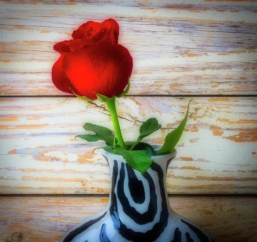 Red Photograph - Wonderful Red Rose by Garry Gay