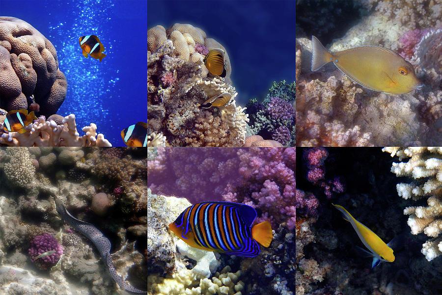 Wonderful Red Sea Sealife Collage  by Johanna Hurmerinta