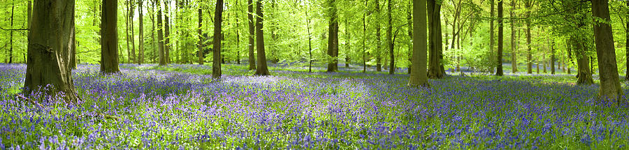 Wonderful Woodland Photograph by Pkfawcett