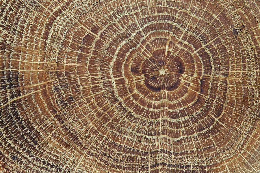 Wood Cross-section Background Photograph by Kalasek