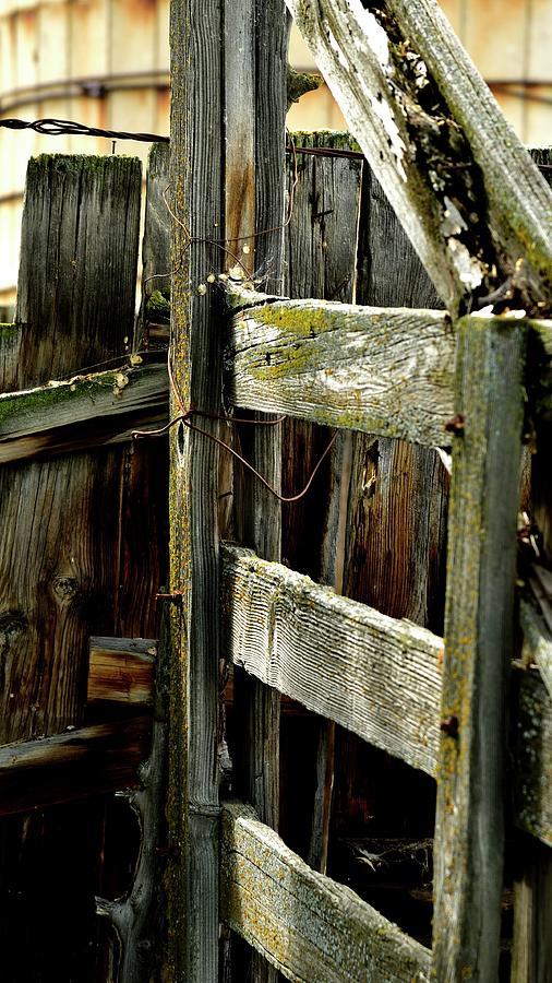 Wood Fence Green Moss Photograph