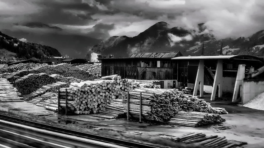 Wood Photograph - Wood Paradise by Borja Robles