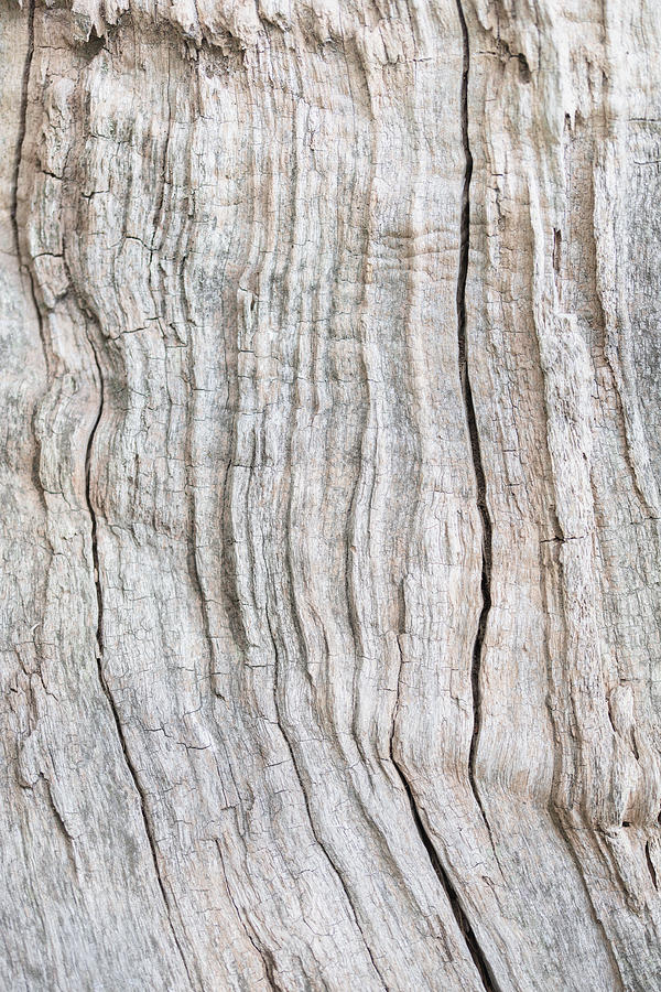 Abstract Photograph - Wood Pattern by 1x Studio Iii