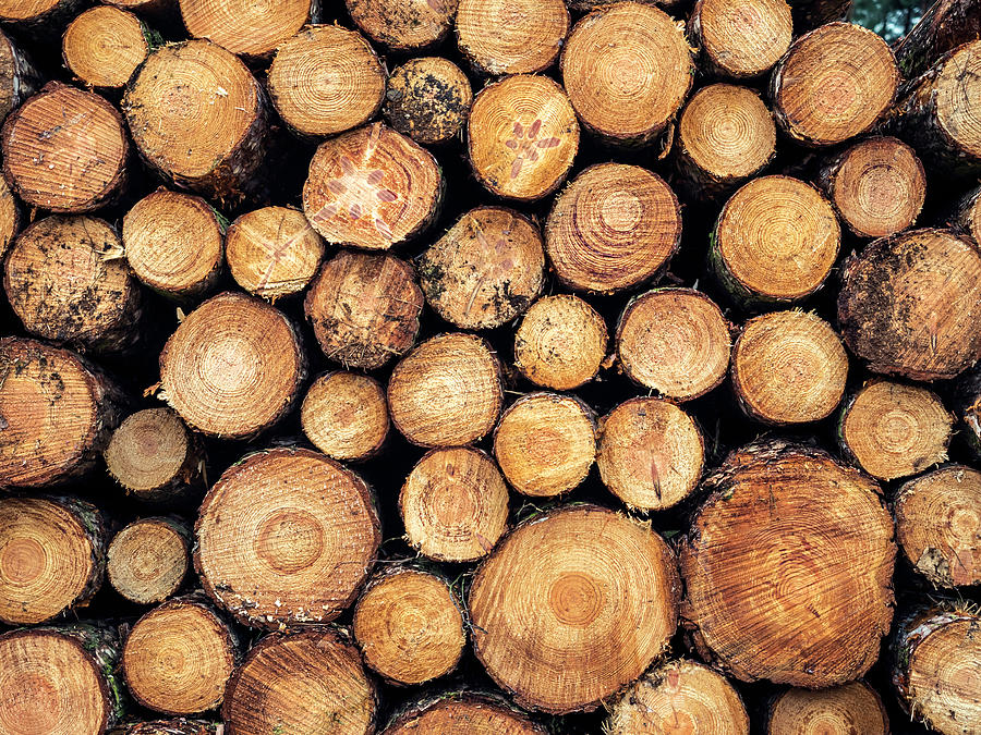 Wood Photograph - Wood Pile by Nick Bywater