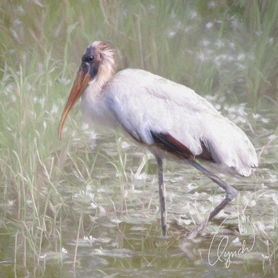 Wood Stork by Karen Lynch