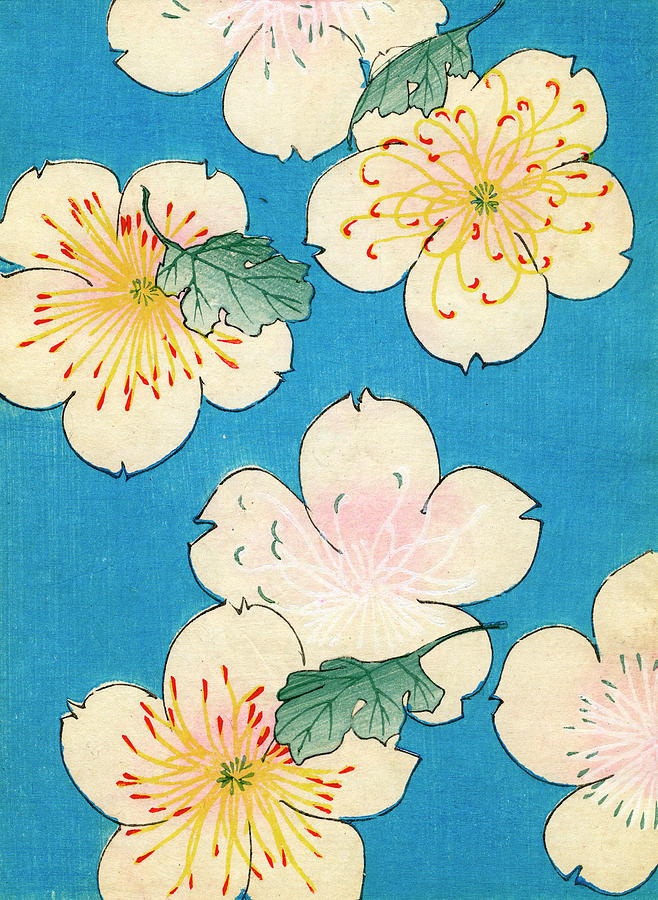 Woodblock Print Of Dogwood Photograph by Graphicaartis