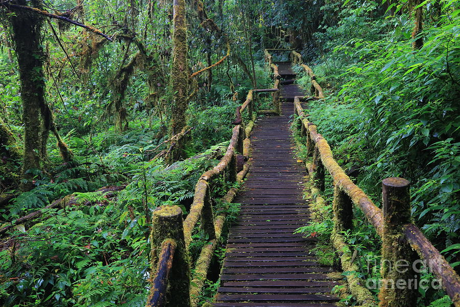 Magic Photograph - Wooden Bridge In Tropical Rain Forest by Korrakit Pinsrisook