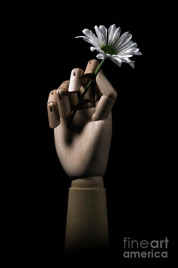 Daisy Photograph - Wooden Hand Holding Flower by Edward Fielding