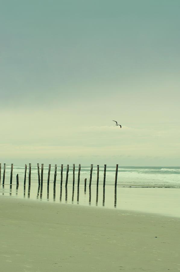 Wooden Pier Piles On Beach Photograph by Jill Ferry Photography