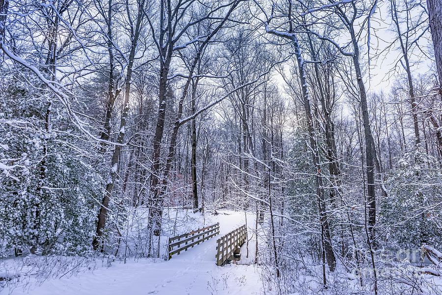 Wooden walking bridge in a frozen forest covered in snow during  by Patrick Wolf