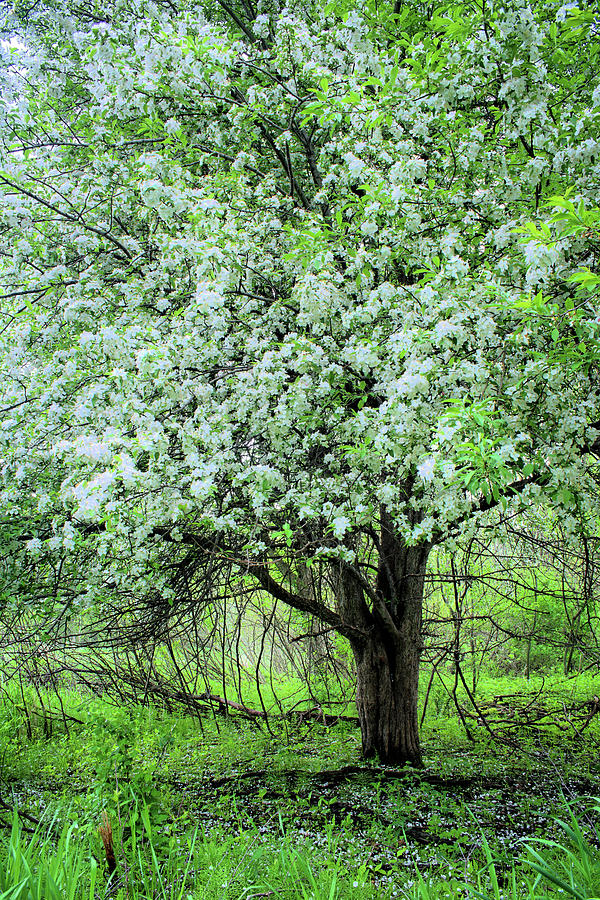 Woodland Blossoms by Bonfire Photography