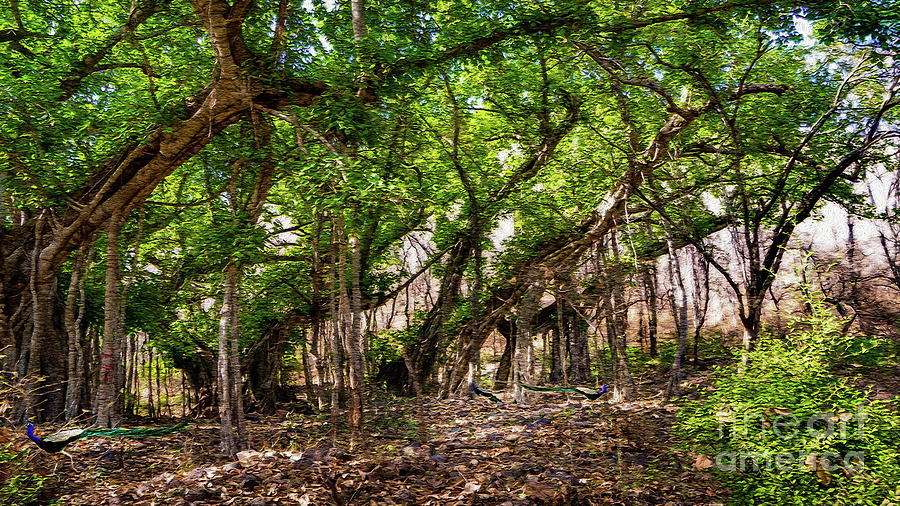 Background Photograph - Woodland Forest Trees  by Manjot Singh Sachdeva