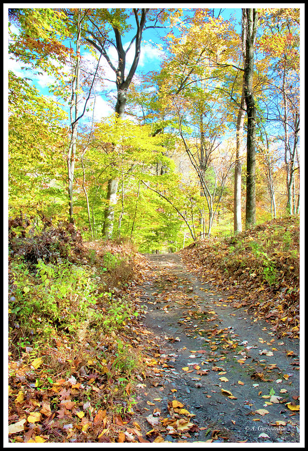 Woodland Path in Autumn, Southeastern Pennsylvania by A Gurmankin