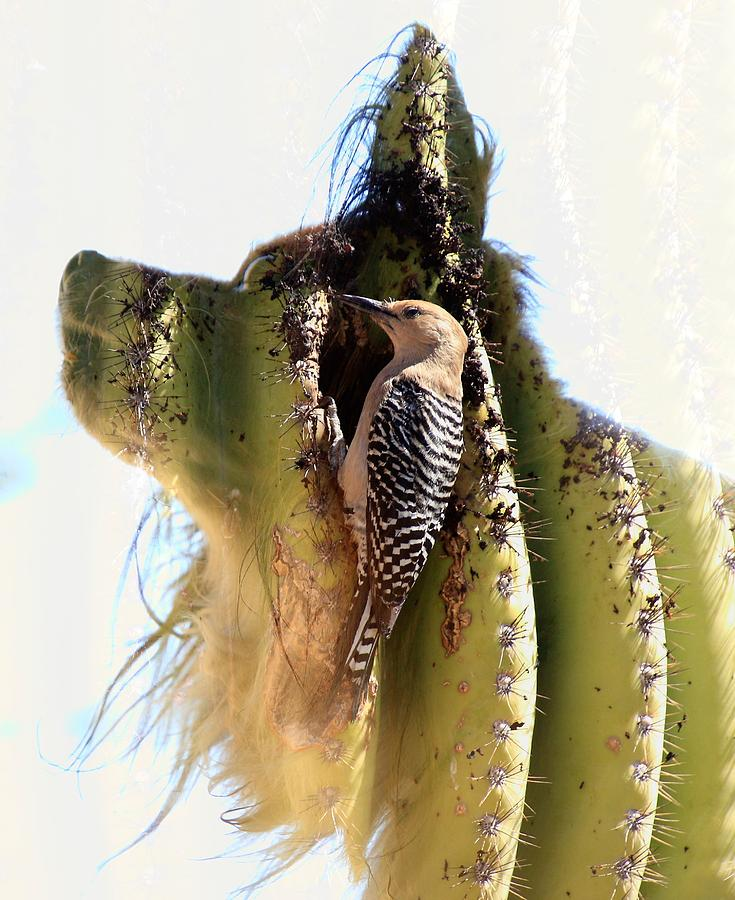Double Photograph - Woodpecker Ear Cleaning by Greg Wickenburg
