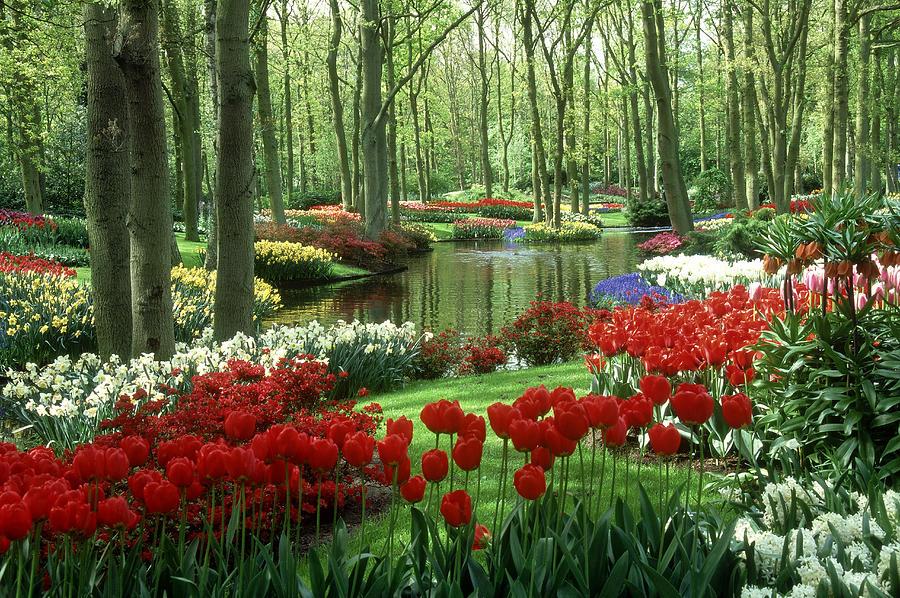 Woods And Stream, Keukenhof Gardens Photograph by Robin Smith