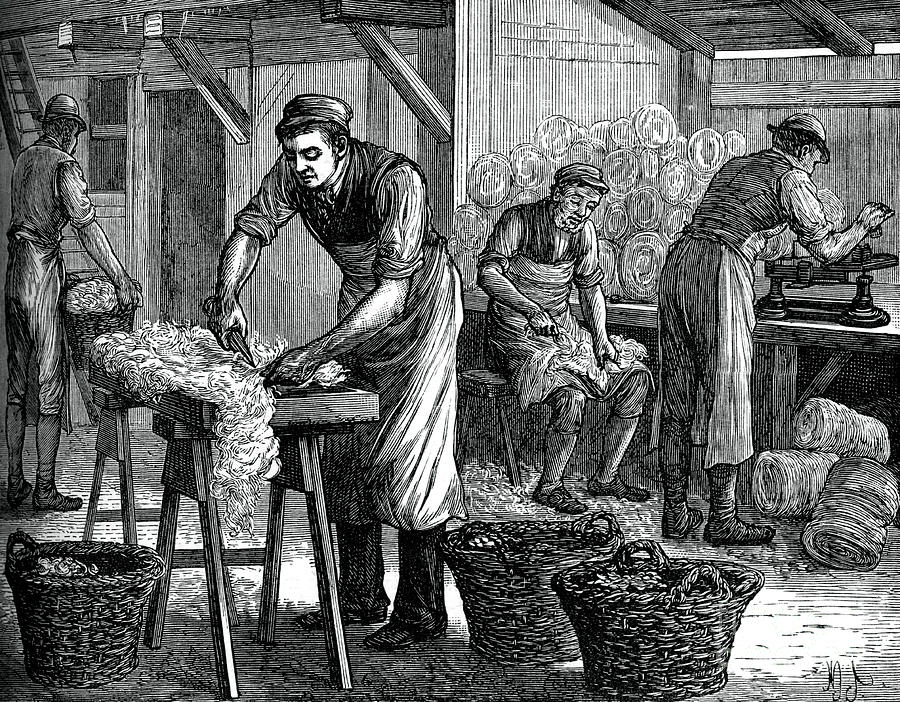 Wool Sorters, C1880 Drawing by Print Collector