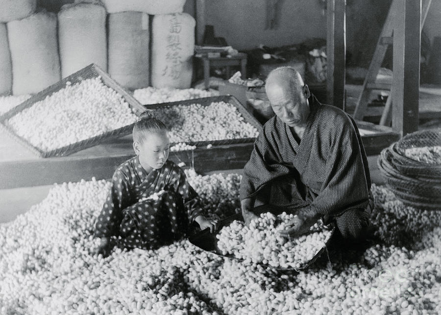 Workers Storing Silk Cocoons Photograph by Bettmann