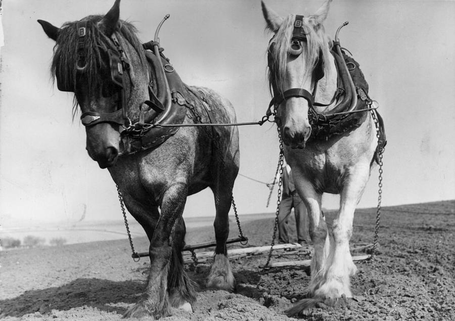 Workhorses Photograph by Maeers