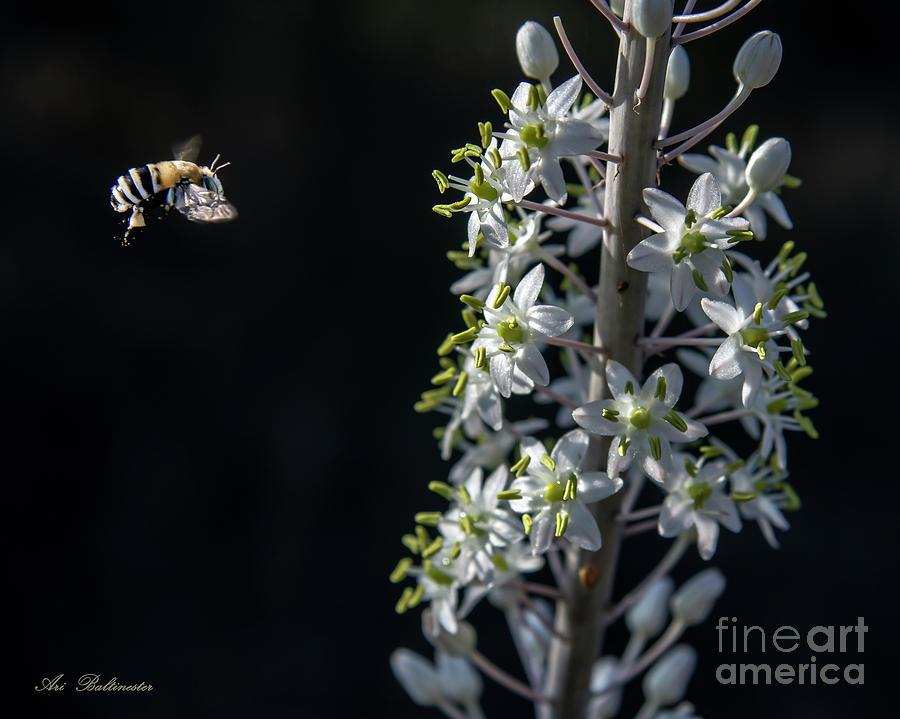 Working bee by Arik Baltinester