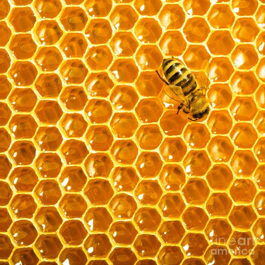 Bee Photograph - Working Bee On Honeycells by Studiosmart