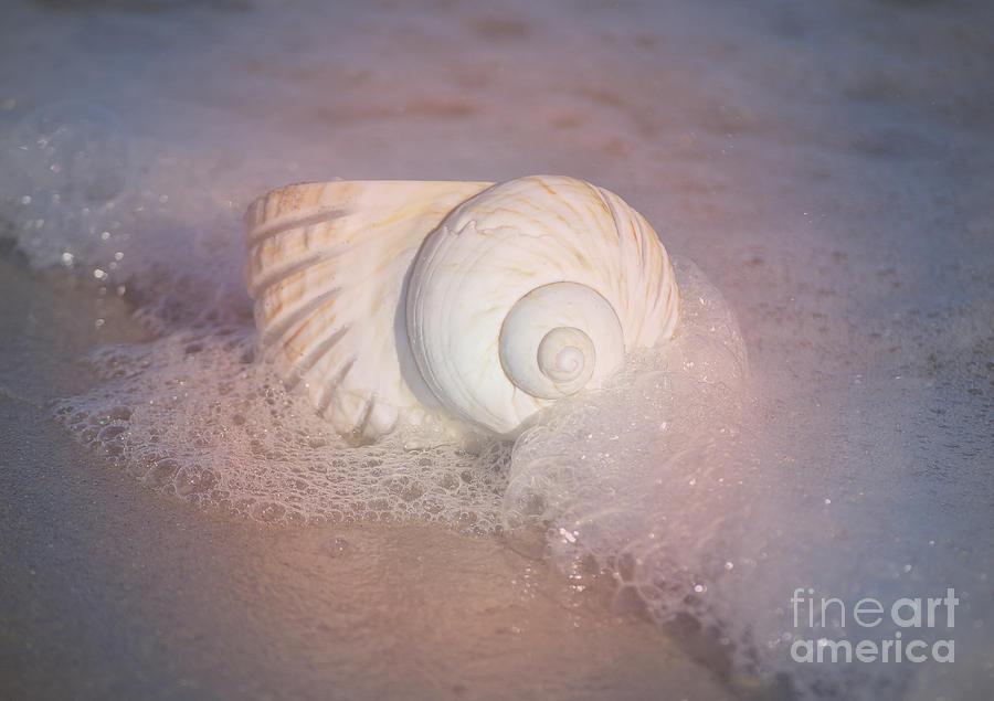 Worn By The Sea by Kathy Baccari