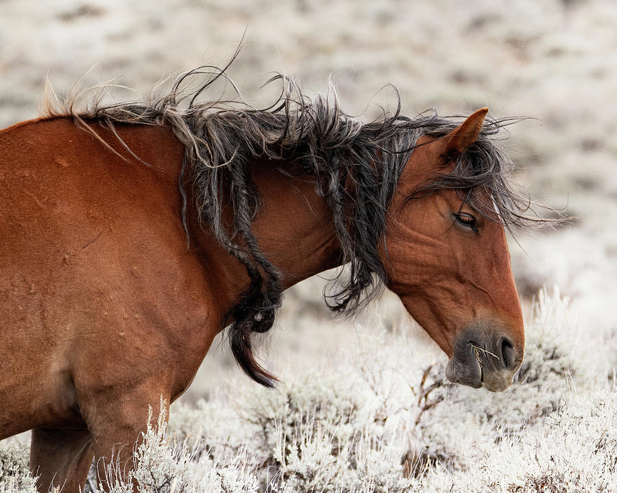 Wyoming hair, don't care by Mary Hone