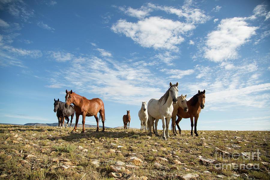 Wyoming Skyline by Terri Cage