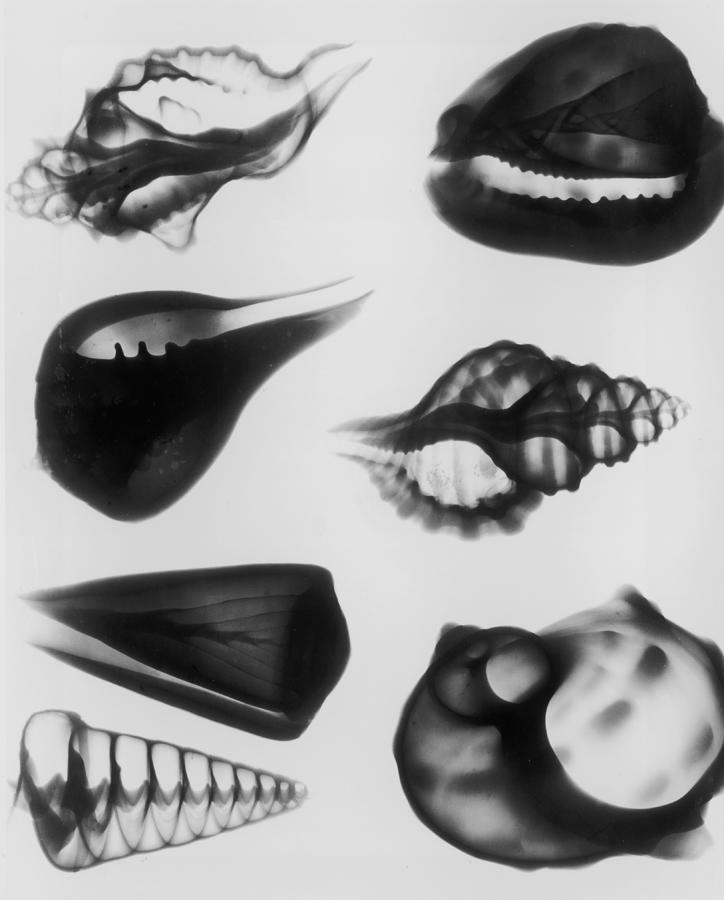 X-ray Seven Shells Photograph by Edward Charles Le Grice