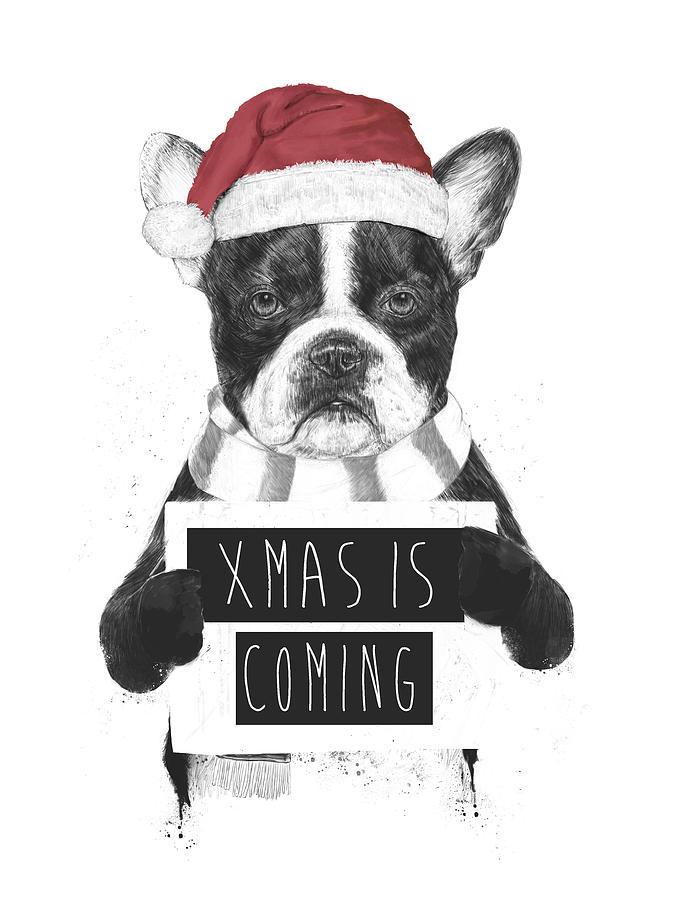 Bulldog Mixed Media - Xmas is coming by Balazs Solti