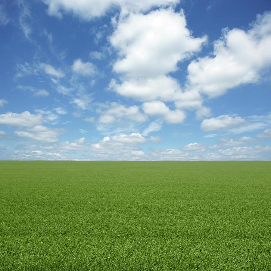 Xxl Green Grass Field Photograph by Sharply done