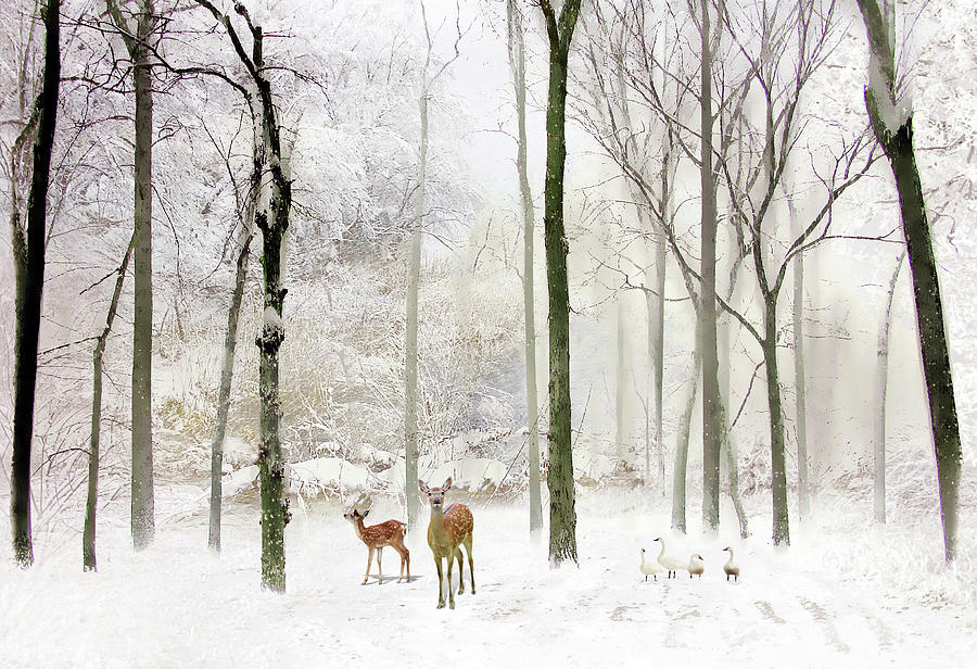 Winter Photograph - Forest Winter Visitors by Jessica Jenney