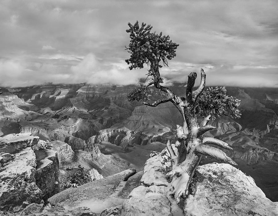 Yaki Point, South Rim, Grand Canyon Photograph by Tim Fitzharris