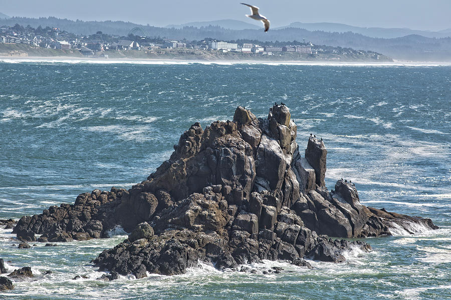 Yaquina Rock Formation Photograph