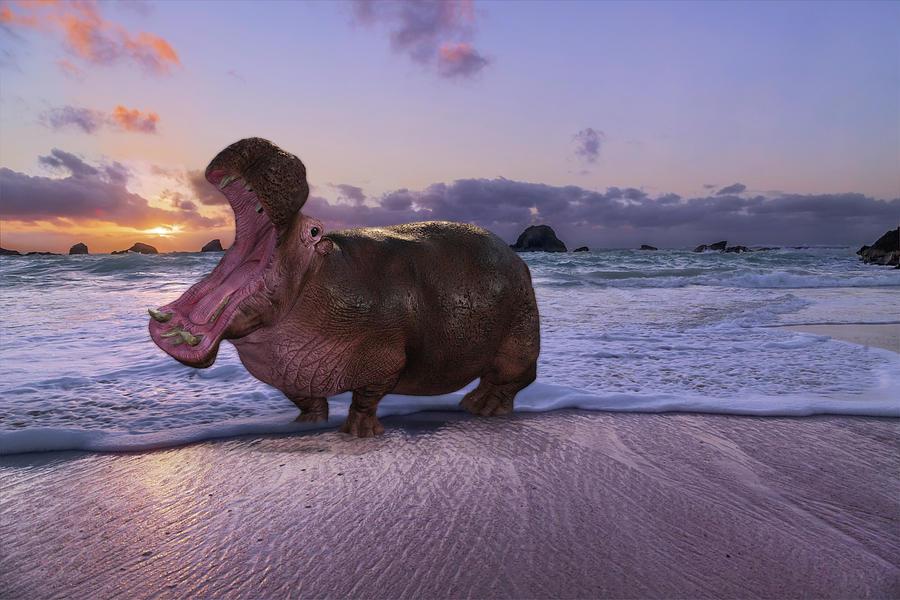 Hippo Digital Art - Yawning Coastal Hippo Hello by Betsy Knapp