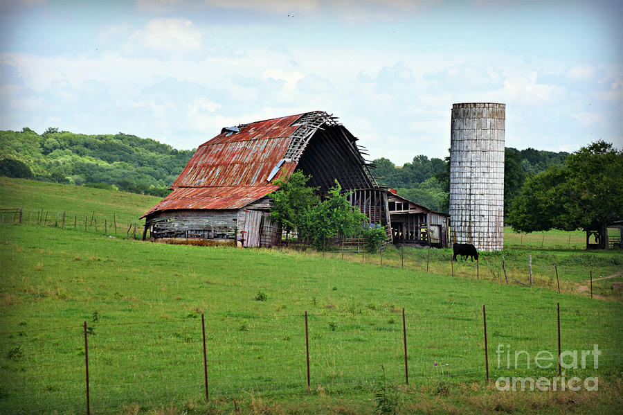 Years Of Wear But Still Standing by Kathy M Krause