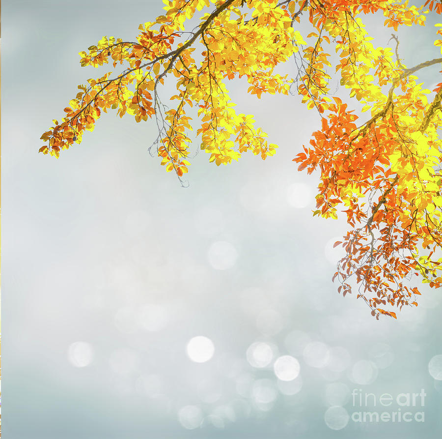 Yellow And Blue Fall Photograph