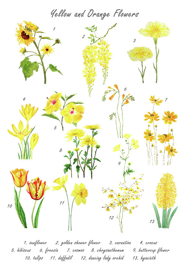 yellow and orange flower collections  by Color Color
