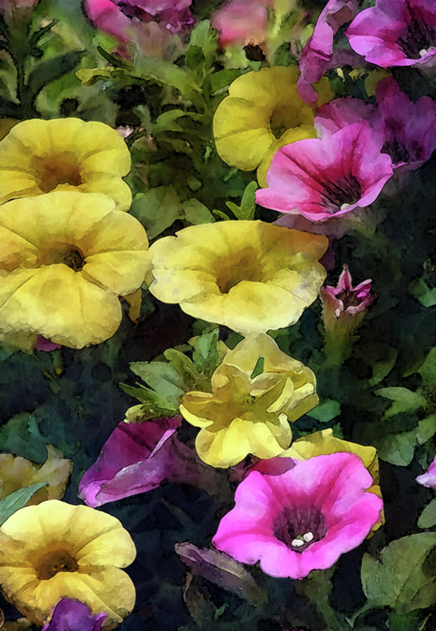 Yellow and Pink Petunias 6536 IDP_2 by Steven Ward